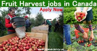 Fruit Harvest jobs Canada