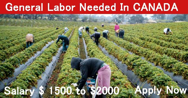 general labor job in canada