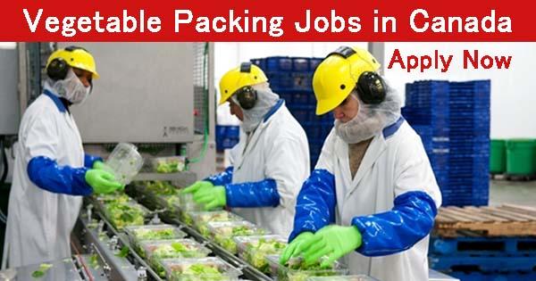 vegetable packing jobs