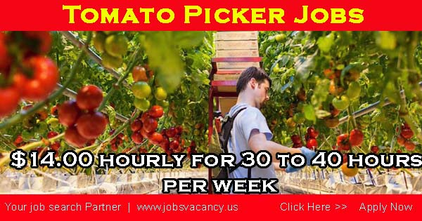 Tomato picker jobs canada