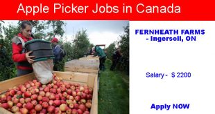 Apple Picker Jobs